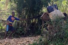 Haiti Day 5 - Superman & Donkey